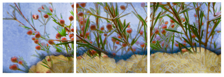 Sold - Plant triptych - composited image